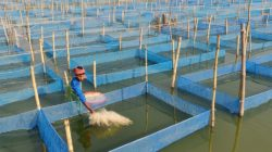Tech Transfer and Training from AIT to Modernize Fisheries and Aquaculture in Bangladesh